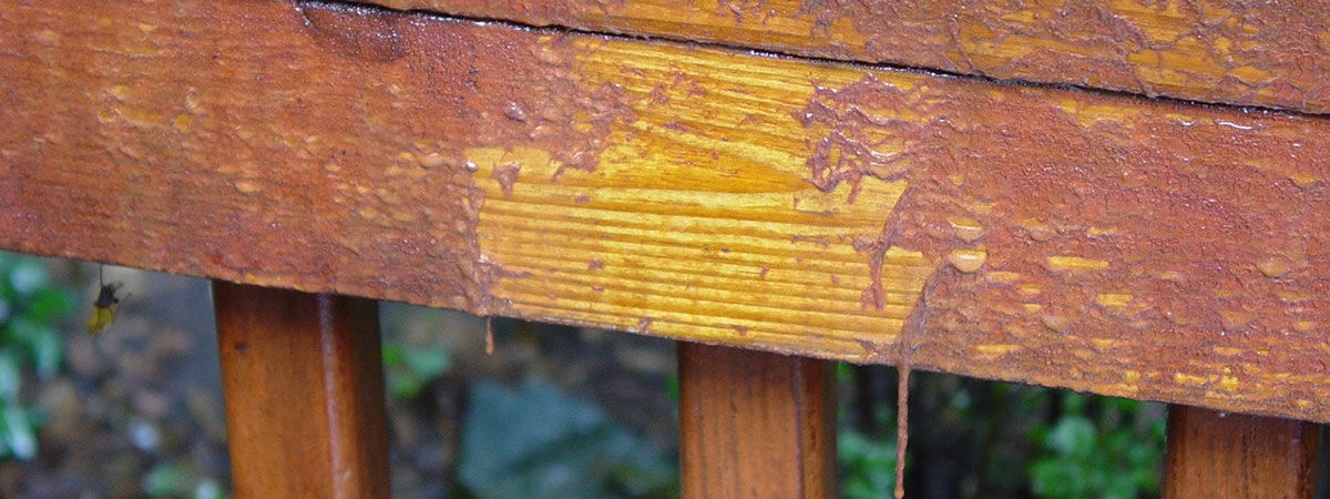 Two Tone Deck Staining Sealing Deck Maintenance Md Va